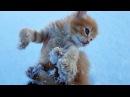 СПАСЕНИЕ КОТЕНКА ИЗ СНЕЖНОЙ ЗАПАДНИ Нашли маленьких котят Поиски мамы кошки ночь в неведение