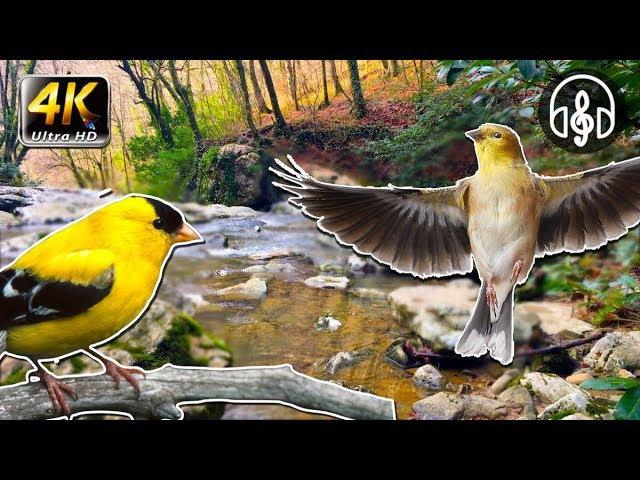 Быстрый способ уснуть! Звуки природы: живой лес, пение птиц, шум реки!