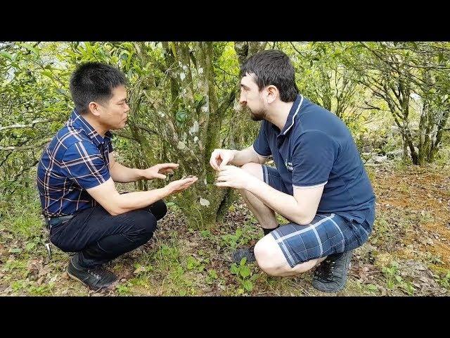 Древние чайные сады Гуандуна. Гушу Ча. Китайский чай Данцун. Деревенская кухня.