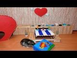С Днем Святого Валентина Хомяк.  Happy Valentine's Day Hamster