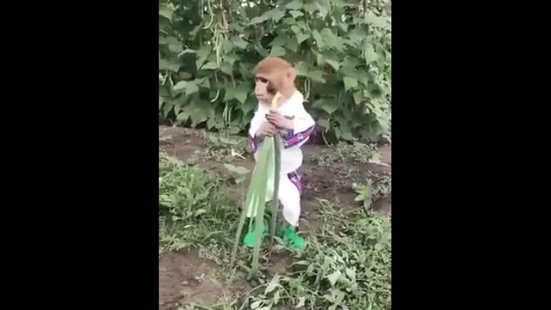 вырос в российской деревне.о бананах ничего не знает