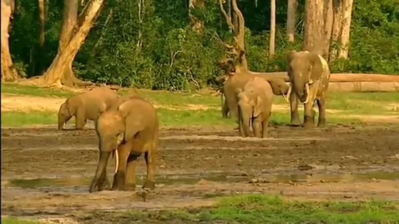 Дикий мир животных. Природа Африки. BBC. Документальный фильм