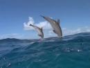 Дельфины...( 360 X 480 )