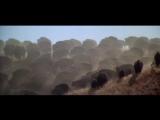 Охота на бизонов из фильма The Return of the Man Called Horse