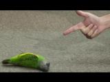 Смешной попугай ))