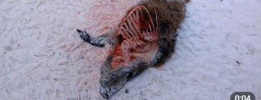 Замерзла жопа последствия, возбудился от голого тела своей девушки