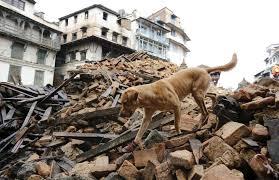 собака землетрясение