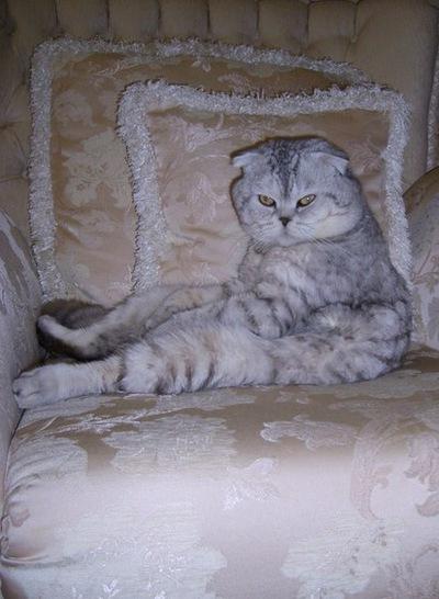 Кот-Для Вязки