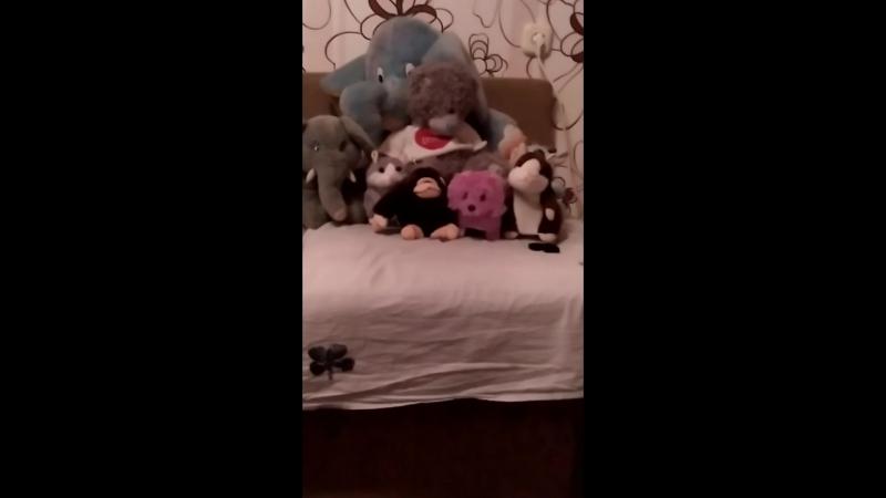 Дружба животных собачки двух хомяков 1 обезьяны одной коробке и 2 слоников и одного медведя