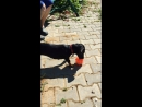 Такса, намордник и мячик