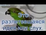 ВИРУСНЫЙ МАРКЕТИНГ 6 ОСОБЕННОСТЕЙ