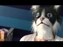 Приколы с Котами - Смешные коты и кошки · coub, коуб