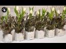 DIY Frühlingsdeko selber machen aus Beton Zweigen Tulpen und Federn Tischdeko