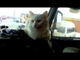 Modern Talking style 80s. Magic Race - Cat Тоnight. Extreme drive Vоlvо truck russian walking mix