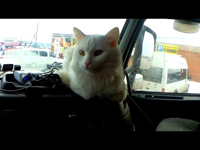 Modern Talking style 80s. Magic Race - Cat Тоnight. Extreme drive Vоlvо truck russian walking mix