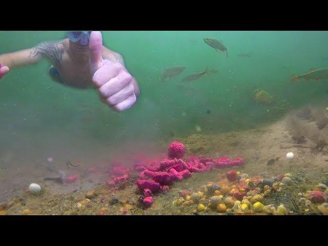 Ловля карпа (Подводные съемки) Angeln auf Karpfen (Unterwasseraufnahmen)