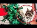 Pisici amuzante vs brazi de craciun