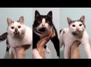 Котофитнес Смешные коты и кошки Пародия на рекламу Лиза и ее любимые котики