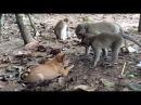 Puppy Playing With Monkey, Monkeys 1070 Tube BBC