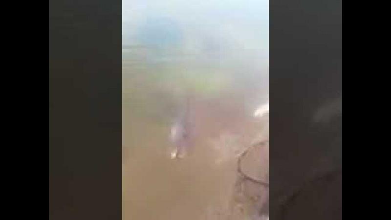 صياد يصيد بسناره:: اكبر (قرموط) من بحيره م