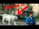 ТИГРЫ АТАКУЮТ ЛЮДЕЙ прямо в зоопарках БУДЬТЕ ОСТОРОЖНЫ