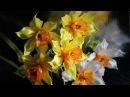 Цветок НАРЦИССА из лент, КАНЗАШИ, мастер класс / Ribbon Flower Kanzashi