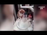 КОШКИ НЕНАВИДЯТ ВОДУ! - Смешные коты в воде _ Приколы с Котами и Кошками - ТОПов