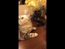 Чистим кошку
