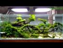 Красивый аквариум задекорированный различными мхами.