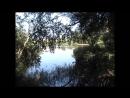 Наш любимый уголок города Ставский лес