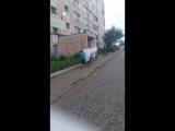 - Настя, дак ты еб