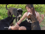 Lovely amazing girl playing with groups of baby cute dog - funny cute dog part 05