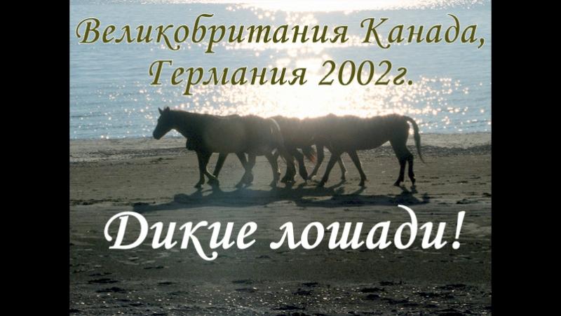 Дикие Лошади! (Великобритания, Канада, Германия - 2002г.)