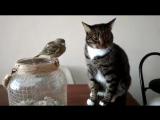 Этот кот изо всех сил старался быть нежным
