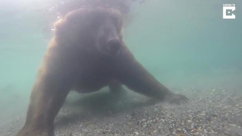 Медведь ловит рыбу в реке Озерная на Камчатке