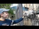 Ослик в Московском зоопарке