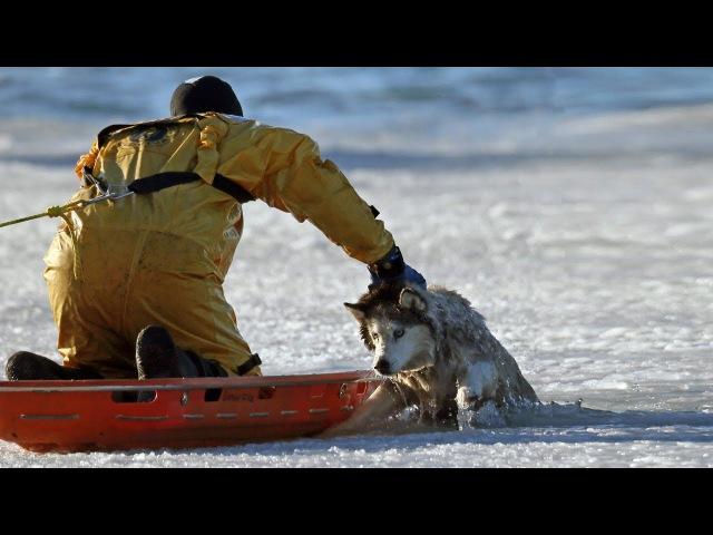 Люди спасают попавших в беду домашних животных