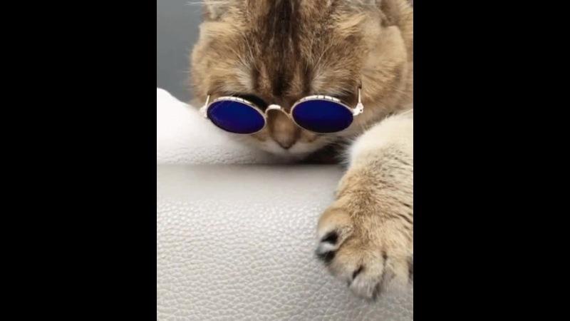 Schlechte Katze