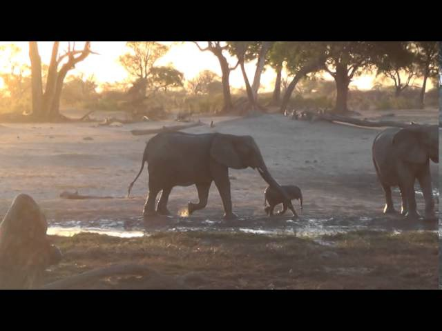 An elephant baby isnt done with a mud bath