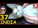 ИНДИЯ 37. МУМБАИ Ворота Индии УЛИЧНАЯ ЕДА Пани Пури, Смешной Кот