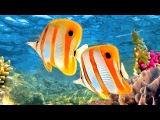 Coral Reef Aquarium &amp The Best Relax Music - 2 Hours - Sleep Music - HD 1080P