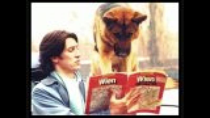 Rex chien flic photos :)