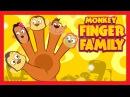 Finger Family Rhymes MONKEY FINGER FAMILY Nursery Rhyme Baby Poem In English
