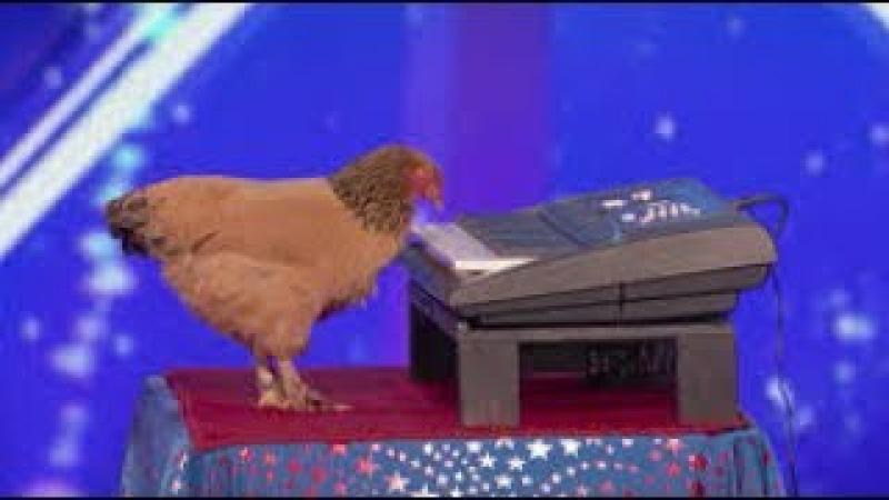 دجاجة بتعزف بيانو - American's got talent 2017 - مترجم