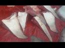 Stingray Fish Curry How To Cook Stingray Fish Sea Fish Recipe Favorite Food