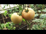 Сюжет ТСН24: Ясногорскому фермеру приходится продавать урожай через Интернет