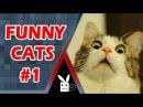 Нарезка приколов со смешными котами. Funny Cats Compilation 2016 part.1 Киски Кошки Котята