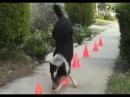 Самая самая талантливая собака в мире животных
