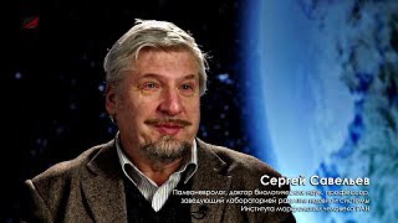 Сергей Савельев Космос и мозг