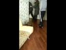 Друзья сняли квартиру во Владивостоке по адресу Карбышева 14 кв 55 проплатили за несколько месяцев Решив отметить праздник дн